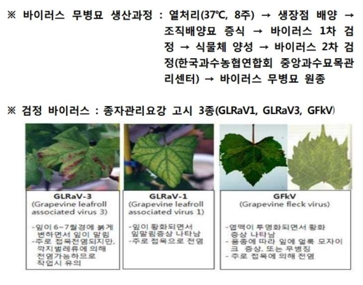 경북농업기술원 바이러스 무병묘 생산과정.pdf_page_1.jpg