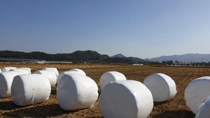 [미래농업과]곤포사일리지 제조를 위한 유용미생물 분양.jpg