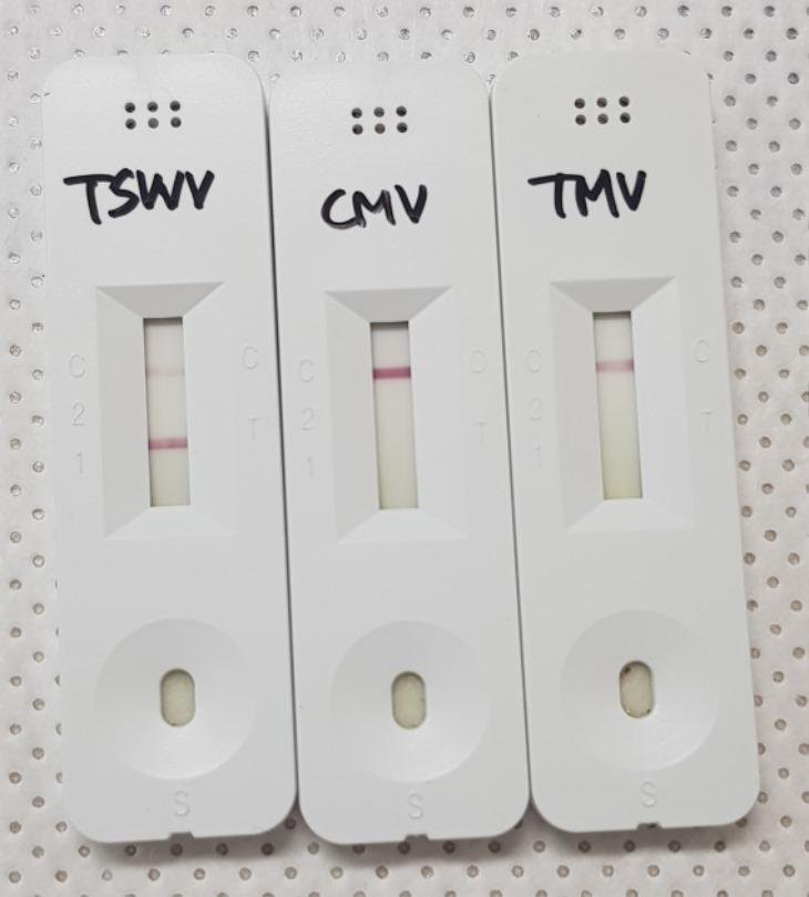경북농기원 식물바이러스 진단키트(상추) (1).jpg