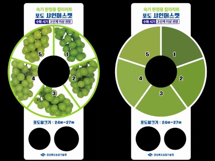 1203-10경북도, 샤인머스켓 칼라차트 개발해 수출 경쟁력 높인다(샤인머스켓_칼라차트_개발).jpg